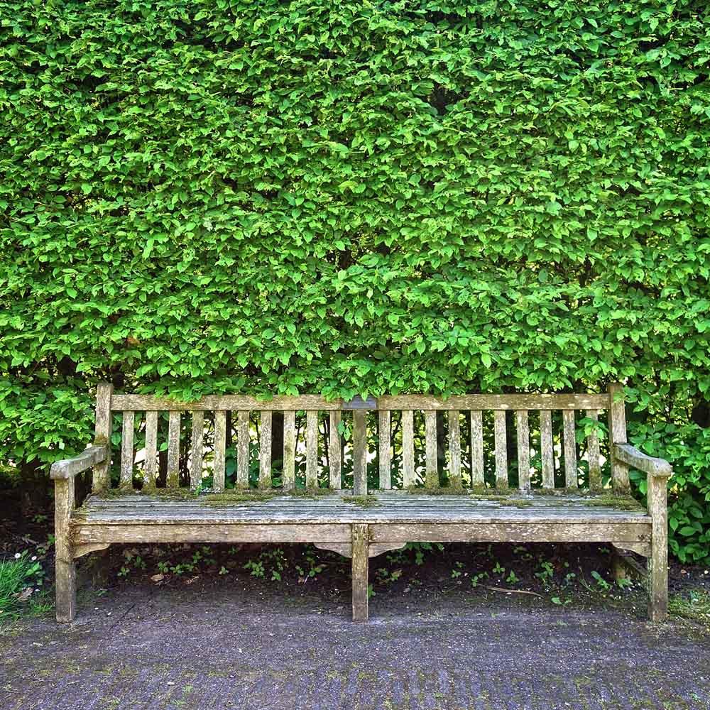 cloture-haie-vegetalisee-champetre-verdure-et-banc_par-nature-et-jardin-paysagistes-des-hauts-de-france_1000x1000px