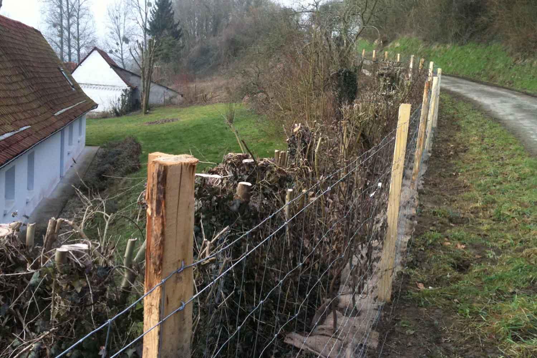 3 bonnes raisons pour choisir une clôtures végétalisée ...
